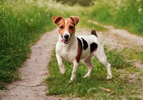 thebarkerlounge-89536-dog-breeds-stimulation-image1